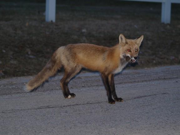 fox_apr1409