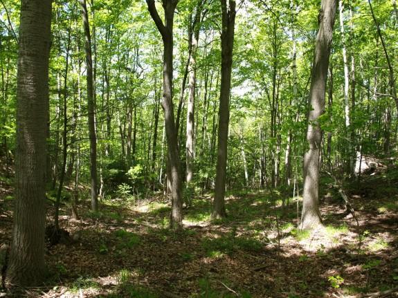 Dense Forest in Palgrave, Ontario