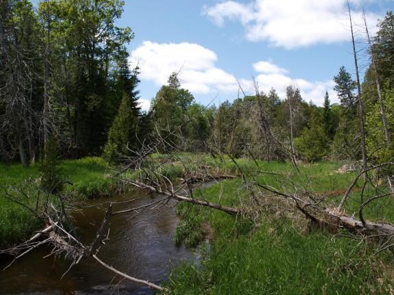 Humber River near Palgrave, Ontario
