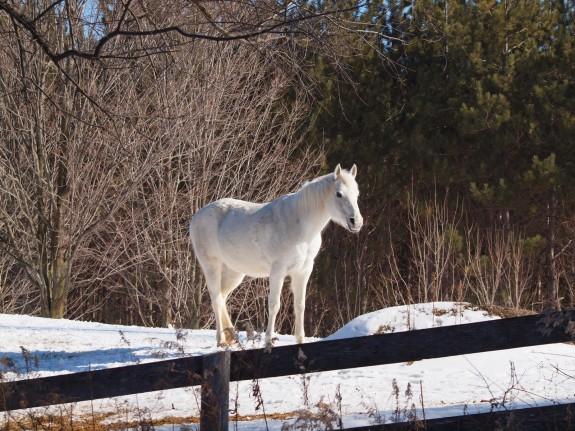 White Horse, Caledon
