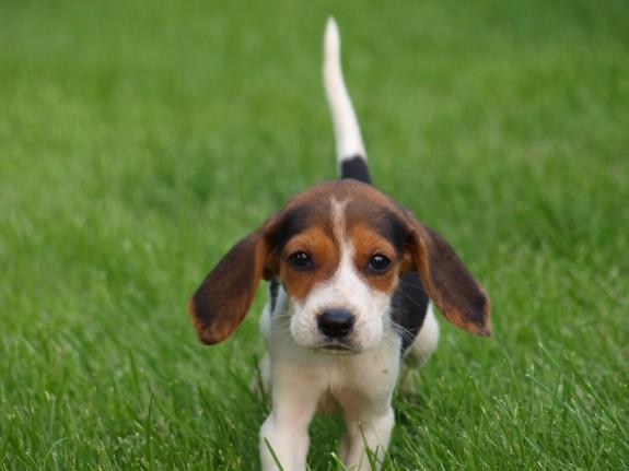 4LeggedLove, Puppy
