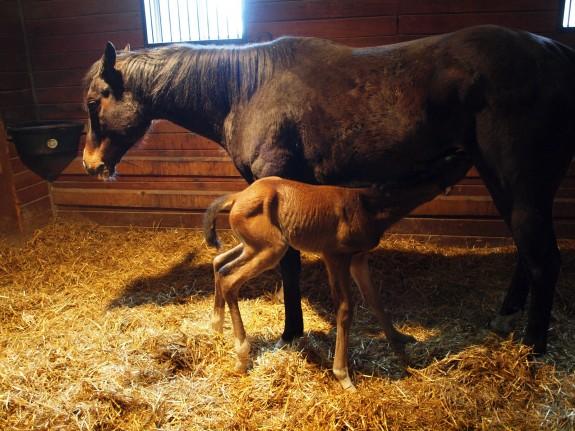 Baby Horse #2