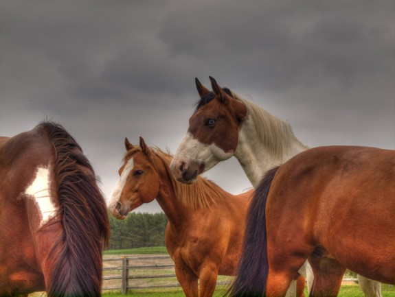 Caledon Horses