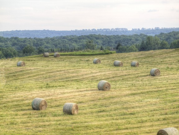 Bales of Hay in Field in Caledon, Ontario
